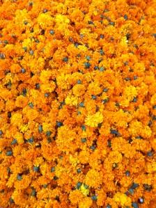 Marigolds on display in Pune